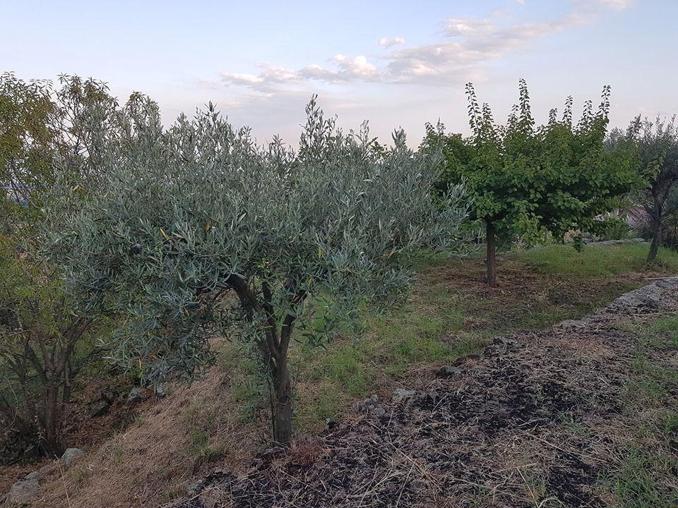 TERRENO AGRICOLO-ZAFFERANA ETNEA