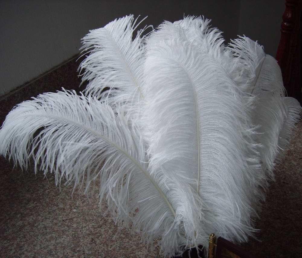 Piume di struzzo bianche per la decorazione